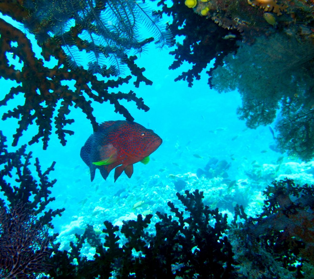 the importance of the preservation of coral reefs The nature conservancy is now helping to restore and maintain the reefs of cuba  rainforest preservation,  the conservancy has set its sights on the coral reefs of cuba.