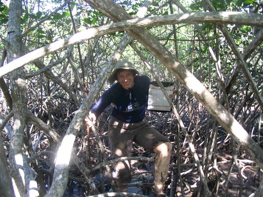 Helen in the mangroves