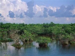 Mangrove Management