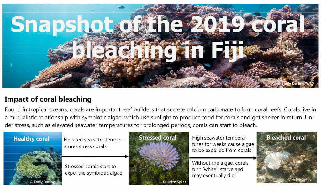 Snapshot of the 2019 coral bleaching in Fiji