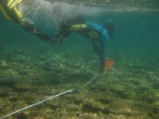 Reef_Check_Fiji